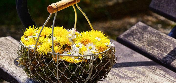 Wildpflanzen & Blüten - gesund durch Bitterstoffe