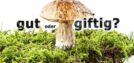 Pilze erkennen: gut oder giftig?