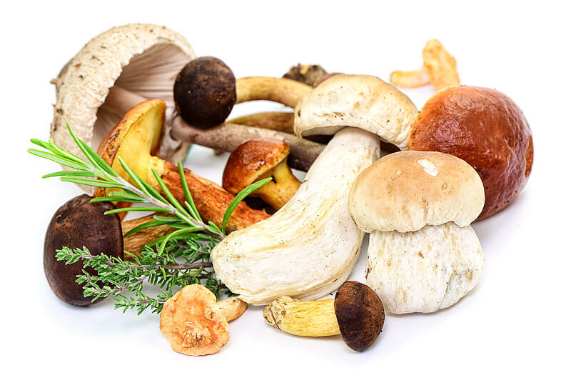 Pilze – Gaumenkitzel & Gefahrenquelle
