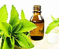 Stevia | Heilpflanzenlexikon