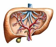 Lebertumore - Symptome, Diagnose, Behandlung und Prognose