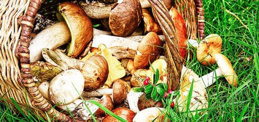 Die besten Tipps zur Pilzsaison im Herbst