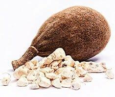 Baobab - der Affenbrotbaum und seine gesunden Baumfrüchte