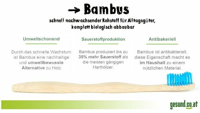 Bambus Infografik Eigenschaften