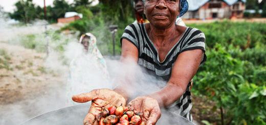 Palmöl - das problematische Fett der Ölpalme