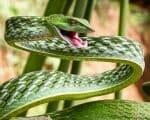 Schlangenbisse
