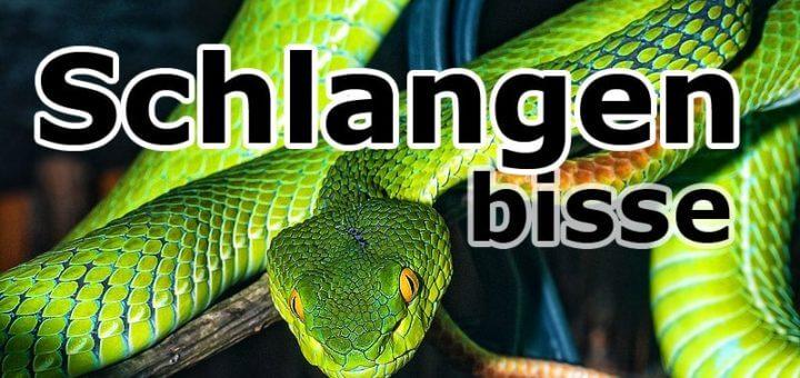 Schlangenbisse – die unterschätze Tropenkrankheit!?