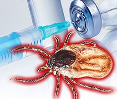 Mit FSME ist nicht zu spaßen: Titerbestimmung durchführen, Impfschutz klären