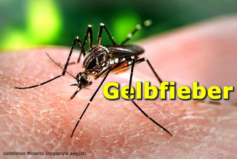 Gelbfieber - Übertragung durch Stechmücken
