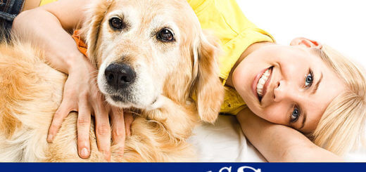 Wellnessurlaub mit Hund