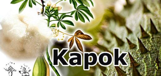 Kapok - alte Naturfaser neu entdeckt