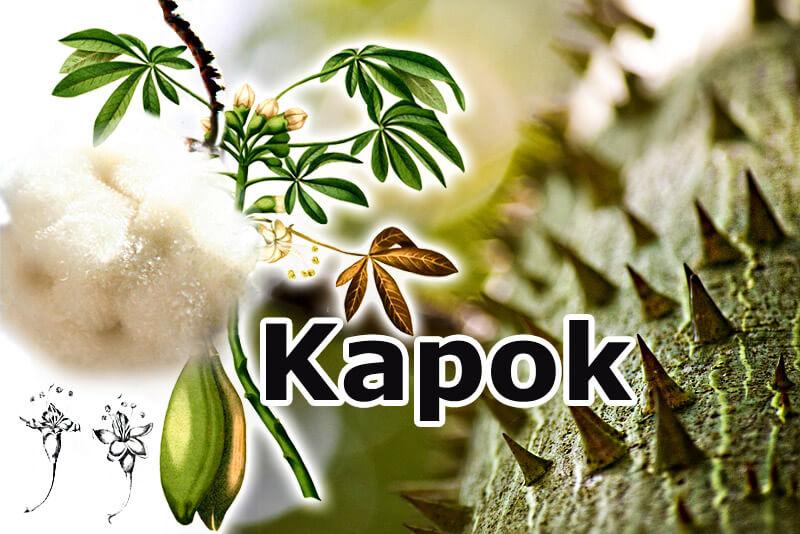 Kapokbaum mit Pflanzenfaser