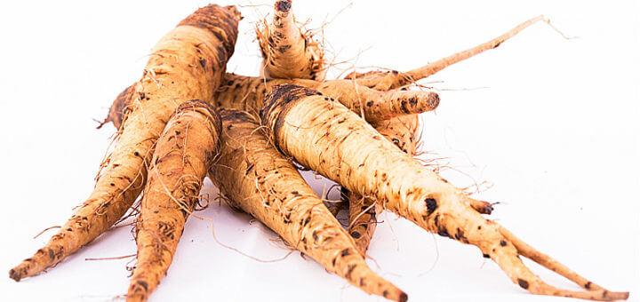Haferwurzel | Wildpflanzen in der Küche