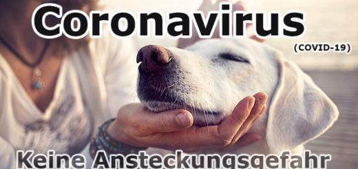 Coronavirus: Keine Ansteckungsgefahr durch Haustiere (COVID-19)