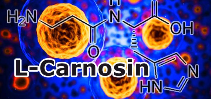 Wofür wird das Nahrungsergänzungsmittel L-Carnosin eingesetzt?