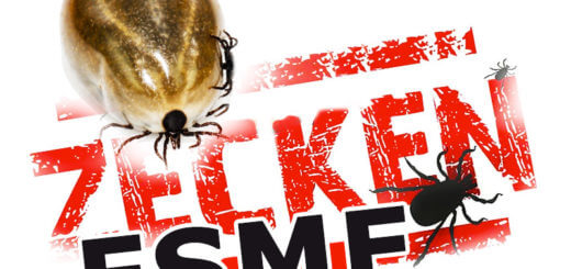 FSME | Krankheitslexikon
