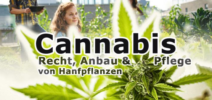 Medizinisches Cannabis: Anbau & Pflege von Hanfpflanzen
