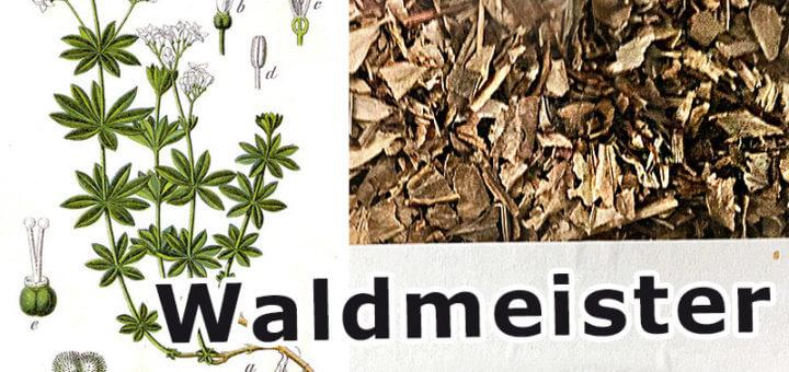 Waldmeister | Wildpflanzen in der Küche