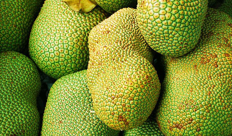 Jackfrucht - jackfruit