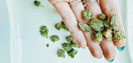 Medizinisches Cannabis: welche Sorten, für welche Anwendung?