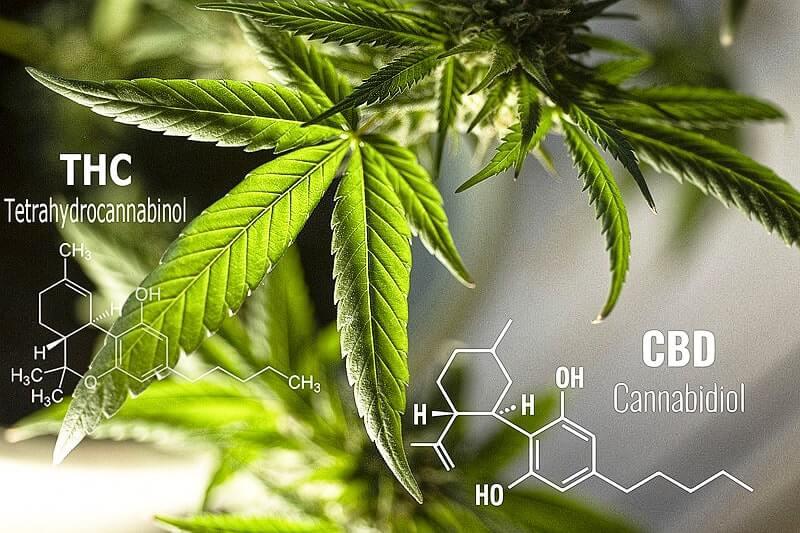 Was ist der Unterschied zwischen THC und CBD?