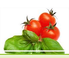 Mozzarella mit Tomaten & Rucola