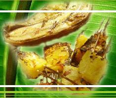 Gegrillte Ananas und Bananen
