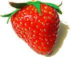 Erdbeeren regen den Stoffwechsel an