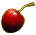 Kirsche (Süßkirsche)