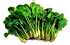 gesunder Spinat