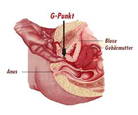 G-Punkt bei der Frau, Anatomie