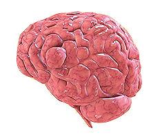 Gehirntumor