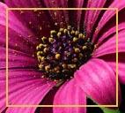 Allergie auf Blütenpollen
