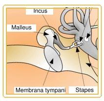 Ohrfurunkel (Otitis externa circumscripta)