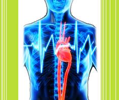 Herzerkrankungen bei Frauen