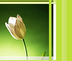 Vorsicht vor giftigen Pflanzen!