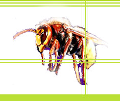 insektenstiche bienen wespen hornissen. Black Bedroom Furniture Sets. Home Design Ideas