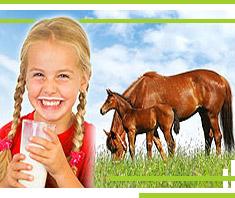 Warum Stutenmilch so gesund ist